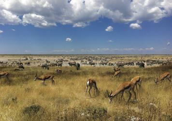 Die Tierwelt Namibias