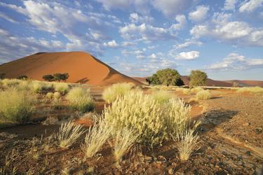 Die roten Dünen der Namib