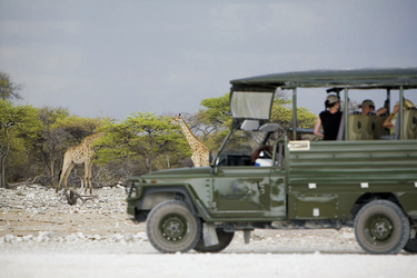 Den Etosha Nationalpark entdecken