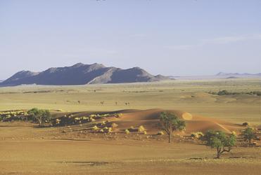 Typisches Landschaftsbild in der Namib