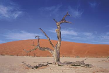 Spektakuläre Landschaft am Sossusvlei