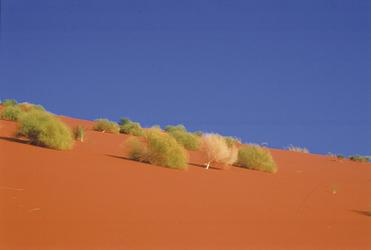 Berauschendes Farbspiel in den Dünen