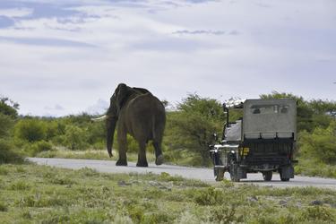 Pirschfahrt im Etosha Nationalpark