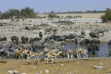 Wasserstelle im Etosha NP