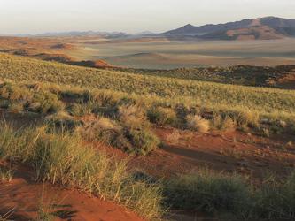 Weite Dünenlandschaft im Namibrand