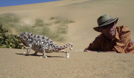Kleine Tiere der Wüste