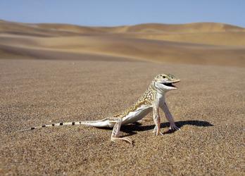 Kleiner Wüstenbewohner