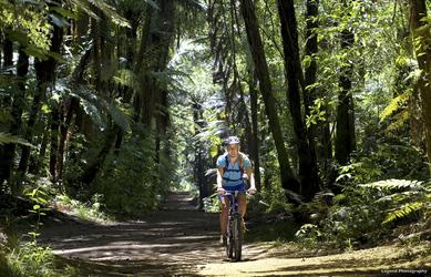 Radfahren im Redwood Forest