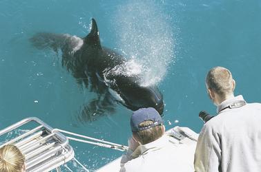 Ausflug zu den Walen