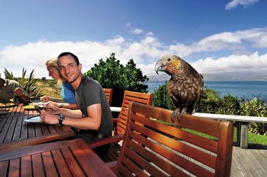Neugieriger Besuch - ein Kea