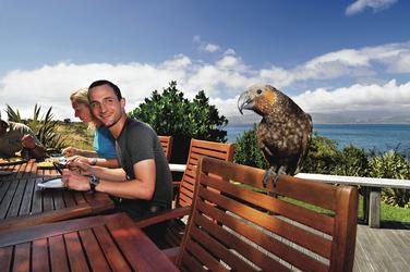 Begegnung mit einem Kea