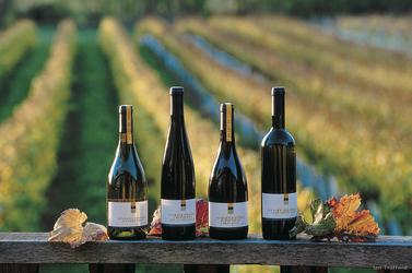 Besuchen Sie ein Weingut
