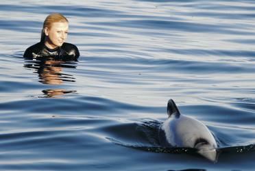Schwimmen mit Delfinen