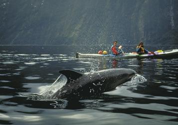 Delfine im Doubtful-Sund
