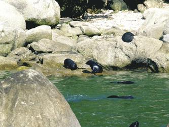 Robben im Abel Tasman Nationalpark