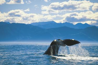 Walbeobachtung