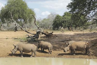 Nashornfamilie am Wasserloch, ©Ruan Mey
