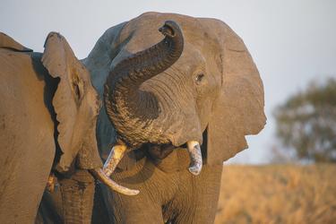 Faszinierende Tierwelt, ©Bruce Taylor