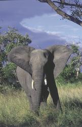 Tierische Begegnung, ©Seasons in Africa