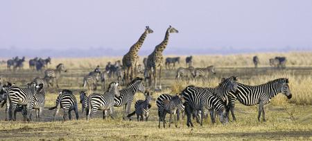 Naturparadies Masai Mara