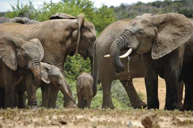 Reges Treiben im Addo Elephant NP