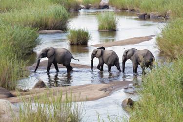 Elefanten am Fluss