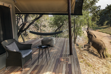 Besuch am Safarizelt