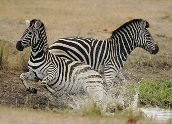Im Sabi Sand Game Reserve