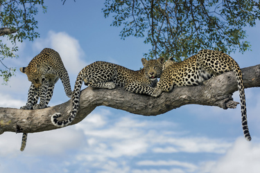 Atemberaubende Tierwelt