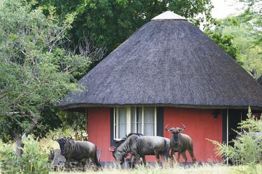 Mohlabetsi Lodge