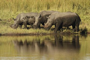 Spannende Nashornbeobachtung