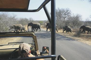 Unterwegs im Krüger Nationalpark