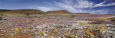 Blumenmeer zur Blütezeit, © La compagnie du cap