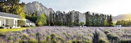 Ein Meer aus Lavendel