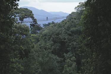 Schwindelerregende Höhen beim Baumkronenpfad