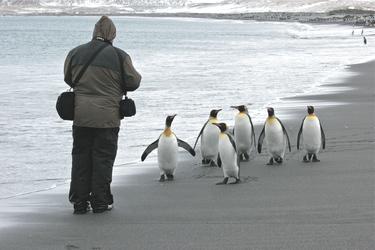 Besuch einer Pinguinkolonie