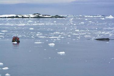 Zoadiac-Ausflug mit Wal-Sichtung