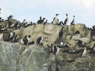 Beagle Kanal - Ushuaia