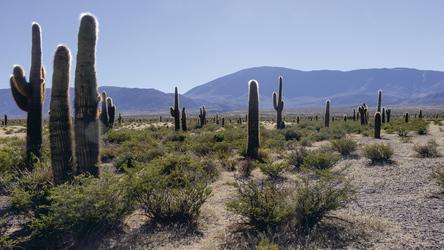 Parque National de las Cardones (zwischen Cachi + Salta)