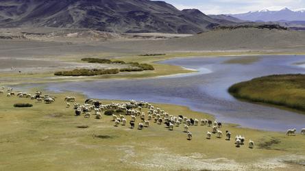 Vega Colorada bei Antofagasta de la Sierra