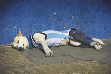 Hund in Argentinien-Flagge