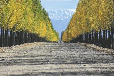 Herbststimmung bei Mendoza