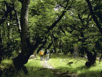 Lenga Wald bei El Chalten