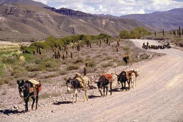 unterwegs in Nordwestargentinien