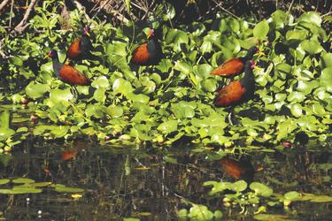 Tierbeobachtung in den Ibera Sümpfen (c) DanielWagner, ©Copyright_ DanielWagner.com.ar