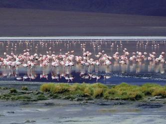 Flamingos in der Hochlandlagune des Altiplano, ©Bolivia-Online