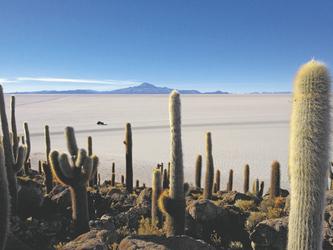 Insel Incahuasi im Salar Uyuni