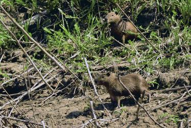 Tierbeobachtung im Amazonastiefland