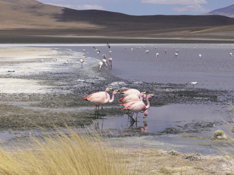 Lagune Ramaditas