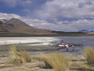 Flamingos in der Laguna Ramaditas